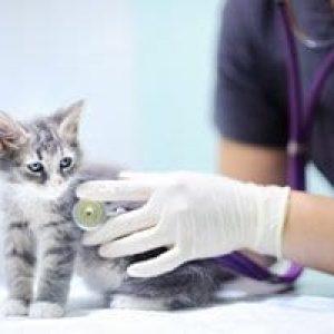 Veterinary-for-Feline